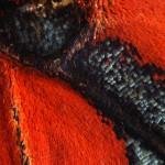 Asterope leprieuri optima (Bolivia)