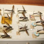 Cordyligaster fuscipennis