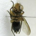 fg-taxon-11-113-02-2