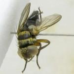 fg-taxon-11-113-05-2