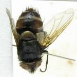 fg-taxon-14-82-07