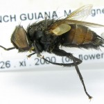 fg-taxon-14-specimen-66-03-2