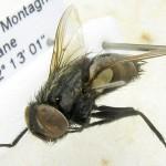 fg-taxon-14-specimen-66-07-2