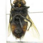 fg-taxon-14-specimen-66-12-2
