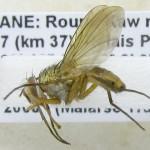fg-taxon-22-specimen-16-03