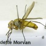 fg-taxon-22-specimen-167-03