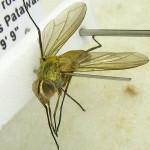 fg-taxon-22-specimen-167-06