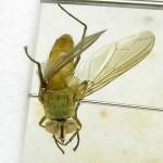 fg-taxon-22-specimen-167-09