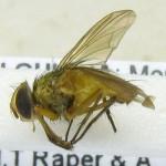 fg-taxon-22-specimen-45-01
