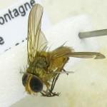fg-taxon-22-specimen-45-06