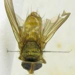 fg-taxon-22-specimen-45-09