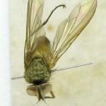 fg-taxon-22-specimen-73-07