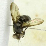 fg-taxon #35 (specimen #145)