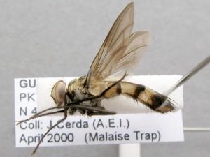 fg-taxon #1 (specimen #39)