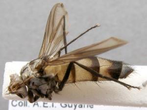 fg-taxon #2 (specimen #77)