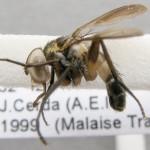fg-taxon #8 specimen-079