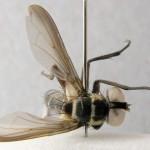 fg-taxon #8 specimen #79