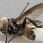 specimen-098-03-640