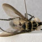 specimen-098-05-640