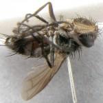 fg-taxon #4 (specimen #154)