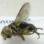 fg-taxon #11 (specimen #185) (male)